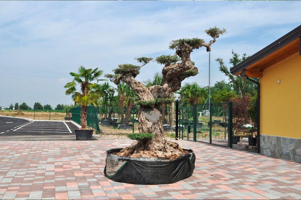 Vivaio Caruso Garden