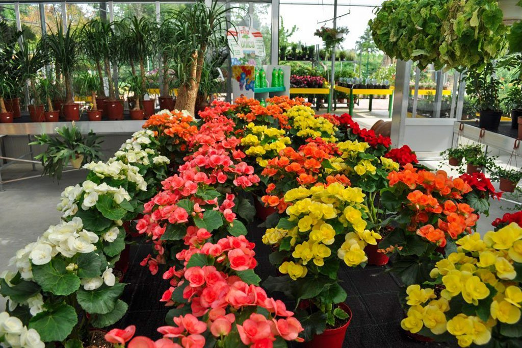 Vivaio Caruso Garden Fiori