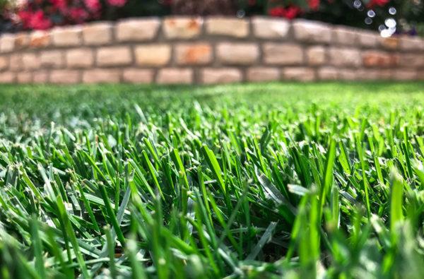 07-giardinaggio-semina-prato