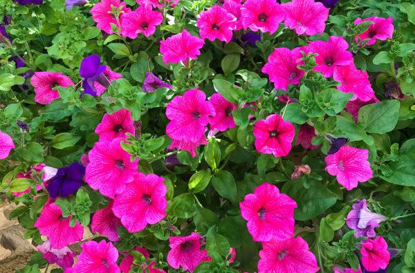 09-giardinaggio-fiori-piante-da-giardino