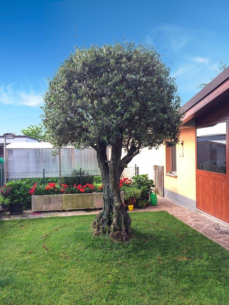 potatura alberi giardini