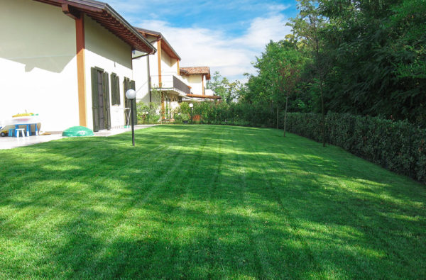 17-giardinaggio-seminare-prato-inglese-in-giardino