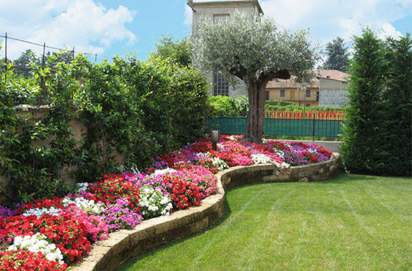 20-giardinaggio-seminare-prato-inglese-in-giardino