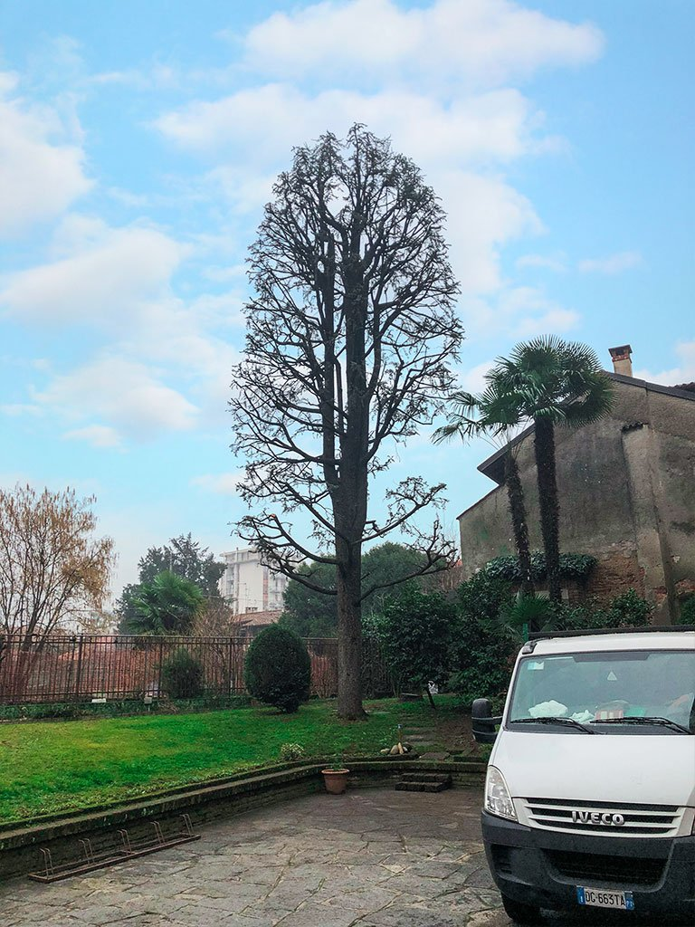 Caruso giardinieri a Milano e provincia