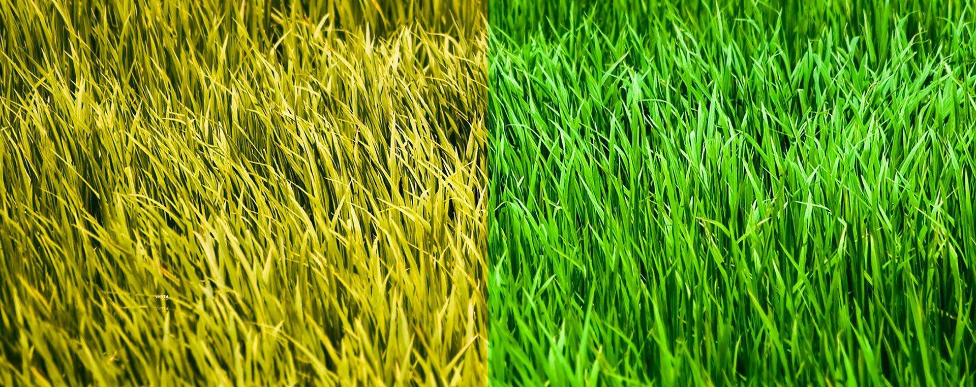 Manutenzione Giardini Milano E Provincia caruso giardinaggio/giardinieri a milano | prima e dopo